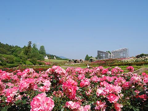 茨城県フラワーパーク